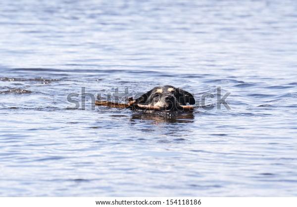 Bathing Dog in southern Sweden