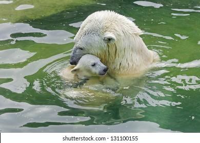 Bathing polar bears.