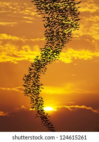 Bats flying again sun and golden sky may use for horrible theme or halloween theme