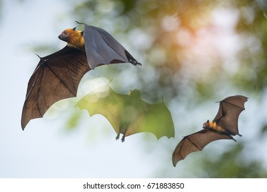 Bats flying in nature
