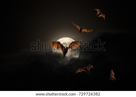 Bats flying on the