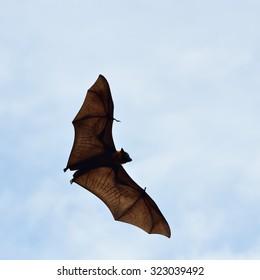Bats flying in sky background