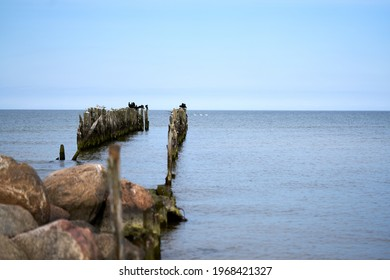 Battered wooden piles of the old pier in the Baltic Sea, leaving the horizon