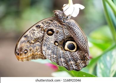 Batterfly in the botanic garden