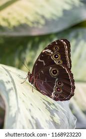 Batterfly in the botanic garden on green leaf