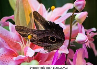 Batterfly in the botanic garden on pink flower