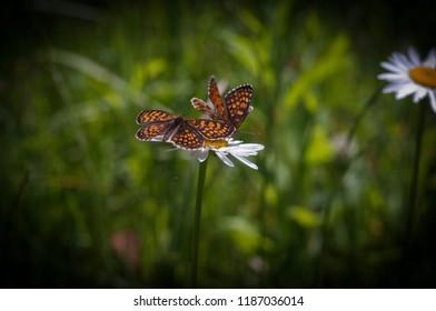 batterfly nature flower