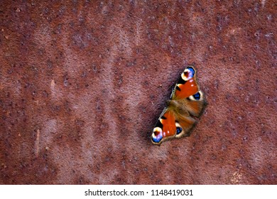 Batterfly on rusty surface