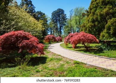 The Batumi Botanical Garden near Batumi, Georgia, Adjara. Beautiful alleys