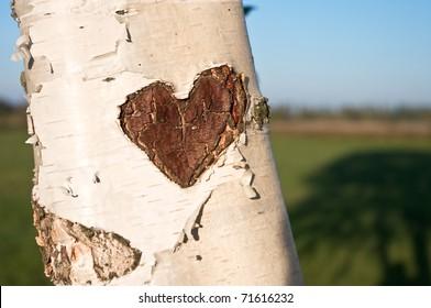 Baum, Herz, Liebe