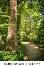 Bavaria, Germany - path among woods at Isarauen national park, the green dense spot of trees along the Isar river near Munich, ideal place to walk, hiking and to take a bike ride.
