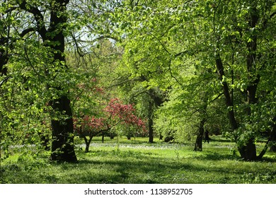Bavarian countyside, beautiful spring view of  a park with lush vegetation, a meadow with white flowers and a flowering tree with pink blossoms
