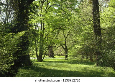Bavarian countyside, beautiful spring view of  a park with lush vegetation, a meadow with white flowers and the shadow of big trees