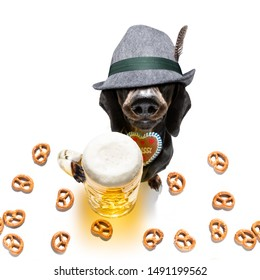 bavarian dachshund or sausage  dog with  gingerbread and  mug  isolated on white background , ready for the beer celebration festival in munich in oktober