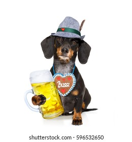 bavarian dachshund or sausage  dog with  gingerbread and  mug  isolated on white background , ready for the beer celebration festival in munich,