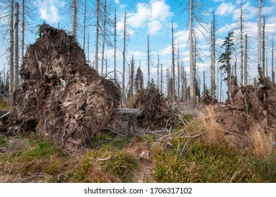Bavarian - Germany, 1. August 2015: The Bavarian Forest National Park is a national park in the rear Bavarian Forest directly on the border with the Czech Republic.