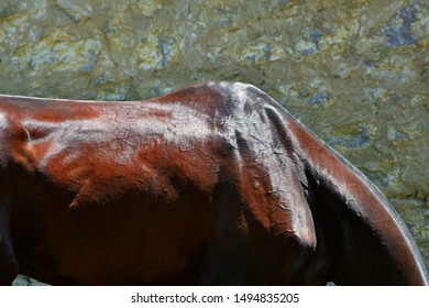 Bay Akhal Teke horse back and neck against yellow textured wall. Animal body part close up.