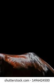 Bay Akhal Teke horse back and neck isolated on black background. Animal body part close up.