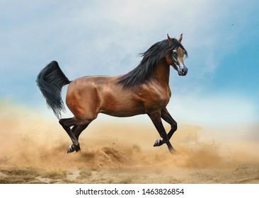 bay arabian horse running in desert