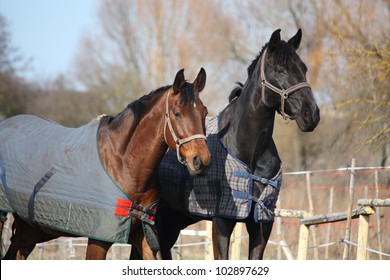 Bay and black horse standing together in the paddock