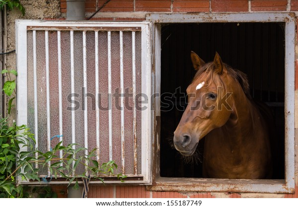 Bay, Brown horse at the window