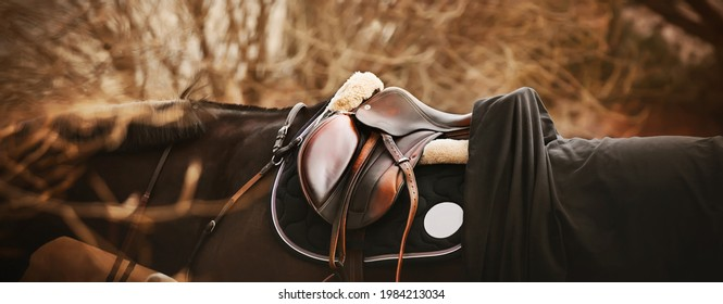 A bay horse with a dark mane is wearing a leather saddle, a dark saddlecloth, a black horse blanket and a bridle on an autumn day. Equestrian sports and ammunition.