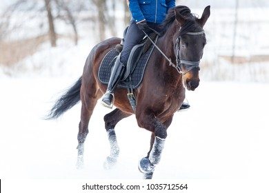 Bay horse with female rider galloping on winter field. Equestrian concept image