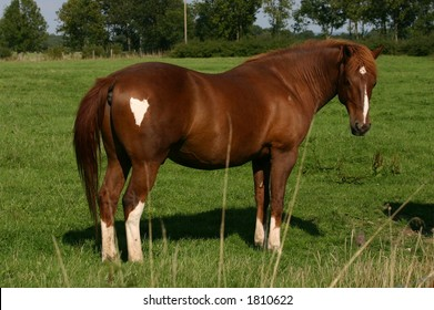 A bay horse in a green field, with a heart shaped spot on it's rump