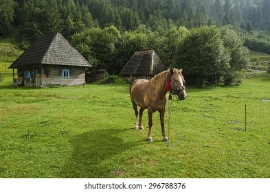 Bay horse with harness in traditional Ukraine style grazes in the mountains