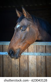Bay horse head looking out of his stable