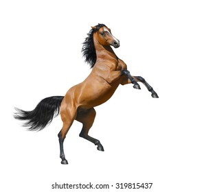 Bay horse rearing - isolated on a white background.