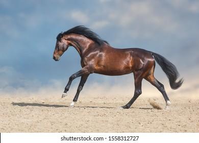 Bay horse  run fast in desert dust against blue background