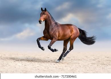 Bay horse run gallop in desert dust