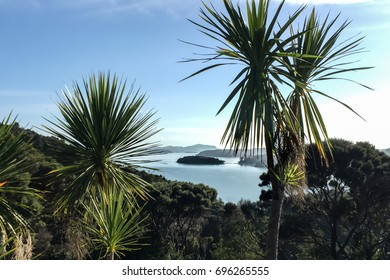 Bay of island cabbage trees