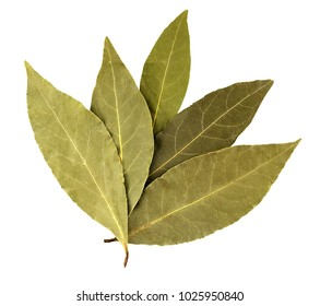 Bay leaf isolated on white background. Macro.