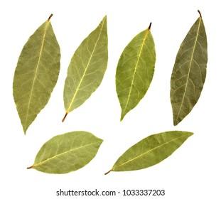 Bay leaf isolated on white background. Macro.