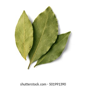 bay leaf on white background with clipping path