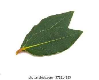 bay leafs isolated on white