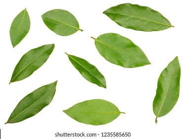 Bay leaves isolated on white background, top view.