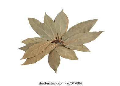 a lot of bay leaves on a white background