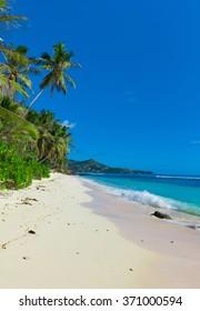 Bay Sea Palms