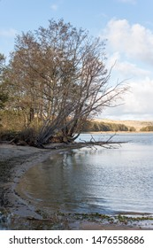 Bay shore in autumn on the Curonian Spit