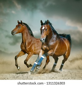 Bay sportive horse running wild in the desert in blue tones