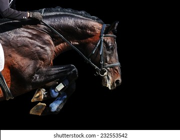 Bay stallion in jumping show, isolated on black background
