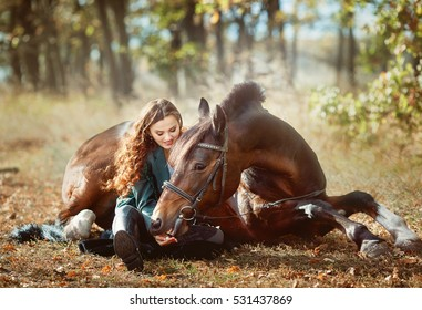 bay stallion lying on the ground. Resting young girl rider