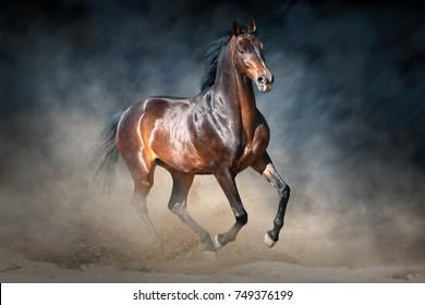 Bay stallion run in dust  against dramatic dark background