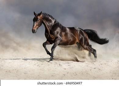 Bay stallion run fast in dust