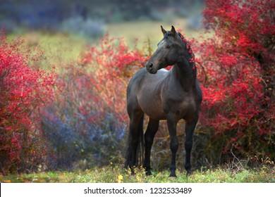 Bay stallion standing in crataegus trees