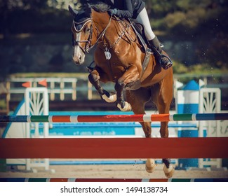 Bay strong graceful horse with a rider in the saddle, dressed in ammunition for equestrian sports, jumping over a high barrier in equestrian jumping competitions.