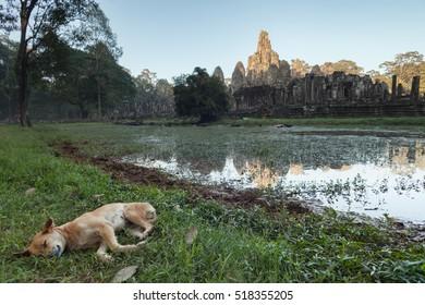 Bayon temple and dog